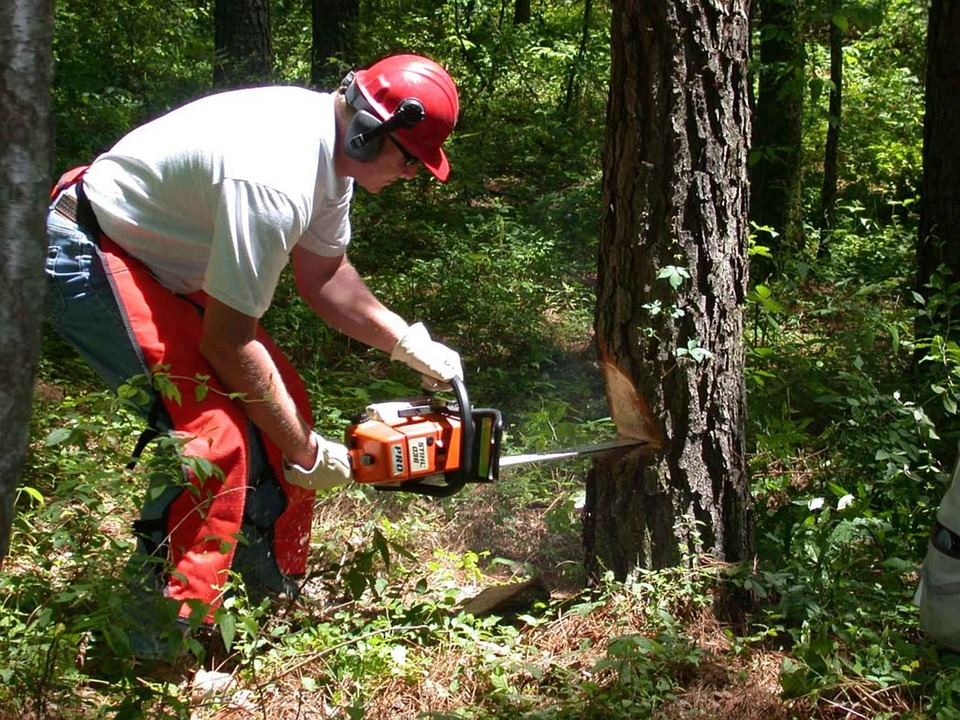 Best Chainsaw for Sale